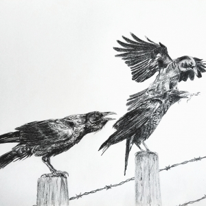 AB Angry crows Graphite 19 x 16