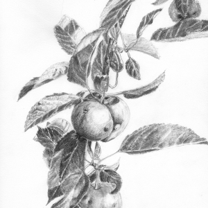 AB Gnarly apples Graphite 15 x 19